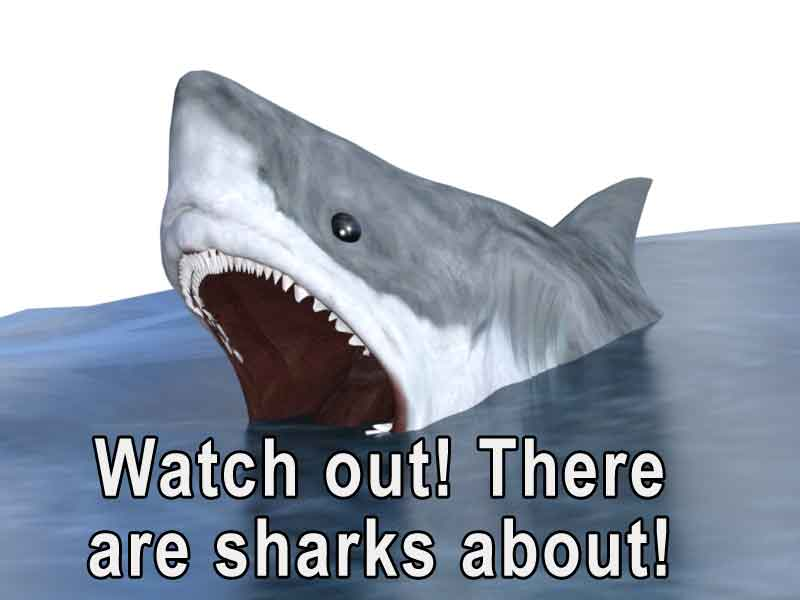 Watch out. There are sharks about!